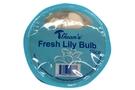 Buy Guan Fresh Lily Blub - 4oz