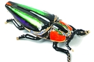 Buy Pacific Bug Jewelry Box #3596