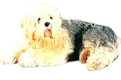 Buy Old English Sheepdog