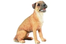 Buy Pacific Border Terrier