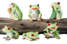 Buy Tree Frogs