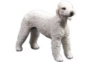 Buy Bedlington Terrier