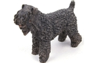Buy Kerry Blue Terrier