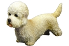 Buy Dandie Dinmont Terrier