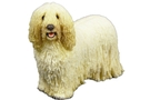 Buy Komondor