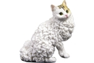 Buy Pacific Selkirk Rex