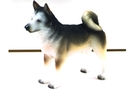 Buy Pacific Siberian Husky #7510