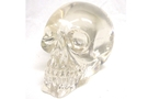 Buy Translucent Skull