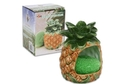 Buy NA Scouring Pad and Holder ( Pineapple Shape) - 2pc set