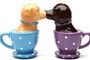 Buy Pacific Magnetic Salt and Pepper Shaker Set (Tea Cup Labs) - 2 1/2 inch
