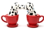 Buy Pacific Magnetic Salt and Pepper Shaker Set (Tea Cup Dalmatians) - 3 1/2 inch
